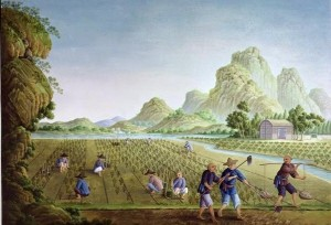 rice-cultivation-in-ancient-China