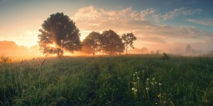 Colorful spring sunrise on meadow