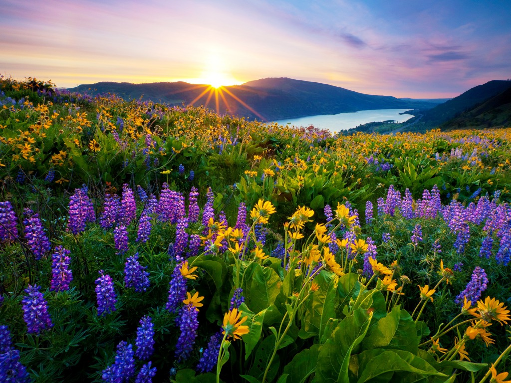 Morning-Sunrise-in-Spring-season-hd-wallpaper