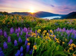 Morning-Sunrise-in-Spring-season-hd-wallpaper