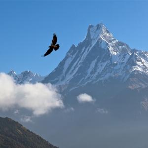 soaring bird sh87394790 fb size