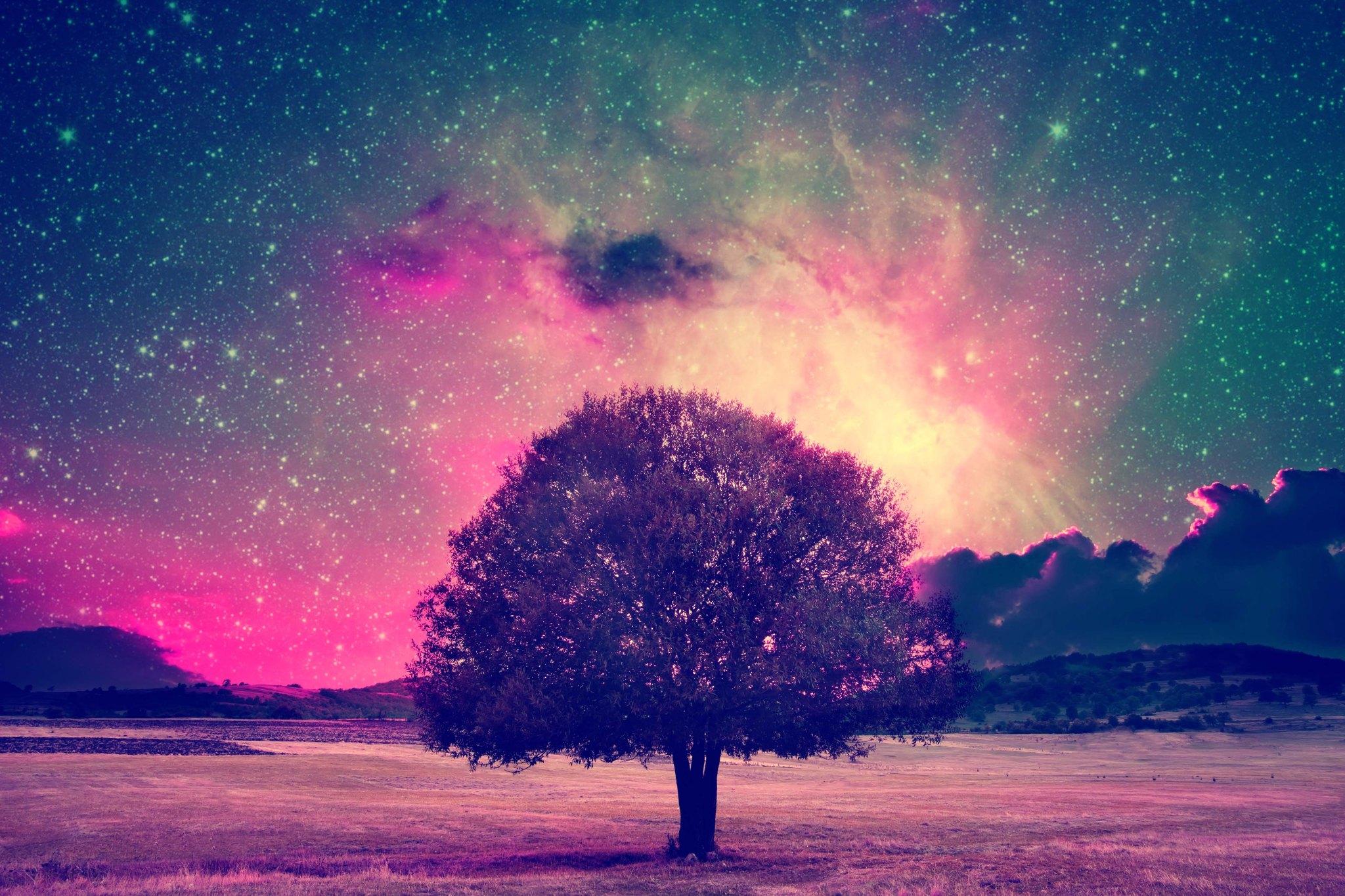 fairy tree landscape